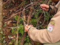 Navasfrias - La Sociedad Zoológica ha denunciado el hallazgo de dos nuevos lazos de caza furtiva en la comarca cacereña de la Sierra de Gata