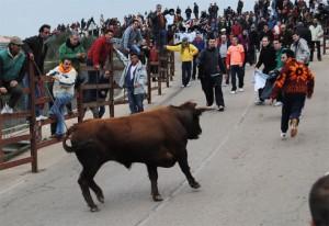 Navasfrias - Carnaval del toro de Ciudad Rodrigo se presenta con tres toros menos en los encierros