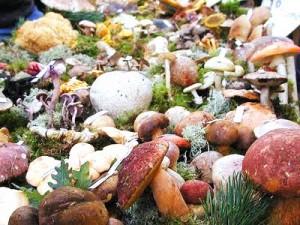 Navasfrias - Crecerán los boletus y los níscalos? o ya no saldrán este otoño?