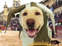 Navasfrias - Ciudad Rodrigo, Avance del Programa del carnaval del toro 2012