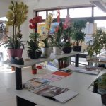 Exhibition of artificial plants Civic Center Foios