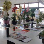 Exposición de plantas artificiales en el Centro Cívico de Foios