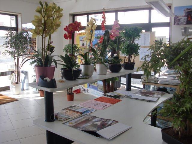 Navasfrias - Exposición de plantas artificiales en el Centro Cívico de Foios