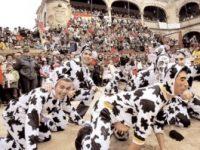 Navasfrias - Carnaval del toro Ciudad Rodrigo, Bases para el concurso de disfraces, carrozas grupos de humor y disfraz callejero
