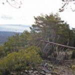 The lame pine timber industry threatened in the southwest of the province