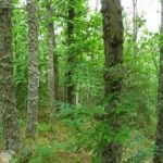 El Rebollar pendiente de declarar como Parque Natural