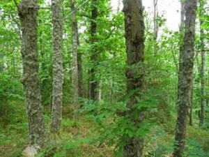 Navasfrias - El Rebollar pendiente de declarar como Parque Natural