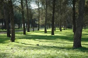 Navasfrias - Continua la preocupacion por el nematodo.En navasfrias y alrededores