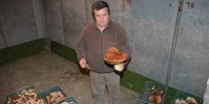 Navasfrias - El pate de hongos de Navasfrias sorprende en la feria agroalimentaria