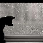 Llegan las primeras lluvias de otoño a Navasfrias