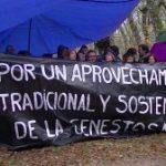 Navasfrias protesta corta de robles centenarios en Genestosa