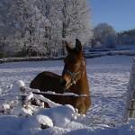 Navasfrias - Vuelve el frío. Alerta amarilla