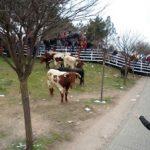 Encierro y fotos carnaval del toro 2013
