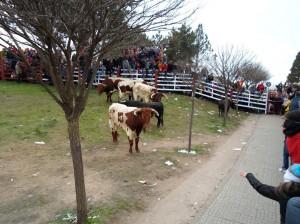 Navasfrias - Encierro y fotos carnaval del toro 2013