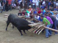 Navasfrias - encierro y toro prueba Aldeia Velha 2013