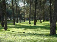 Navasfrias - Restricciones madereras debido al Nematodo