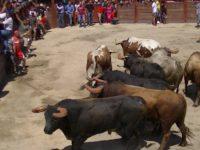Navasfrias - Embolado de toro Aldeia do Bispo