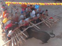 Navasfrias - Foios 2015 impactante imagen del toro y el forcon