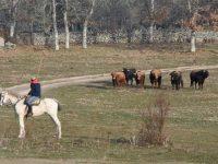 Navasfrias - Carnaval del toro de Ciudad Rodrigo, toros encierro a caballo 2018