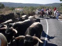 Navasfrias - Eljas celebra sus fiestas patronales